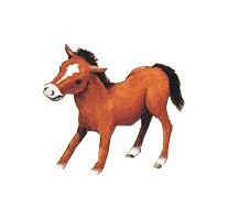 (c) Pony-ranch-lanwermann.de
