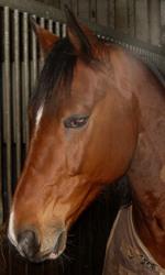 (c) Pferde-physiotherapeut.de