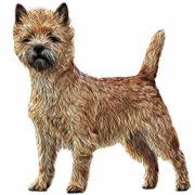 (c) Macgefferts-cairn-terrier.de
